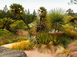 UC Botanical Garden at Berkeley